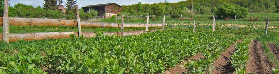 Unsere Heilpflanzen beziehen wir weltweit und achten dabei auf einen nachhaltigen ökologischem Anbau.
